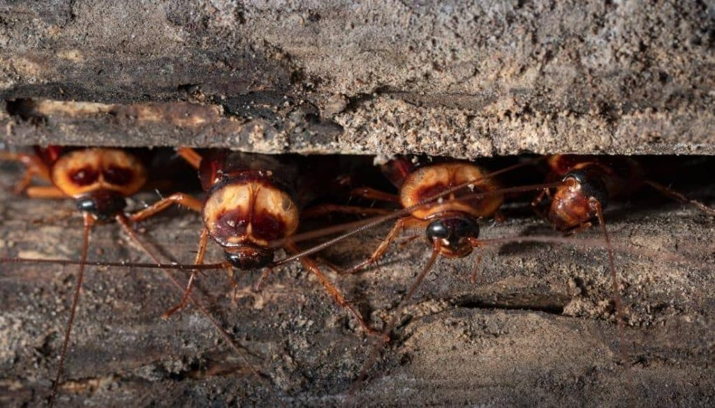 Why Do I Have Roaches In My Yard At Night
