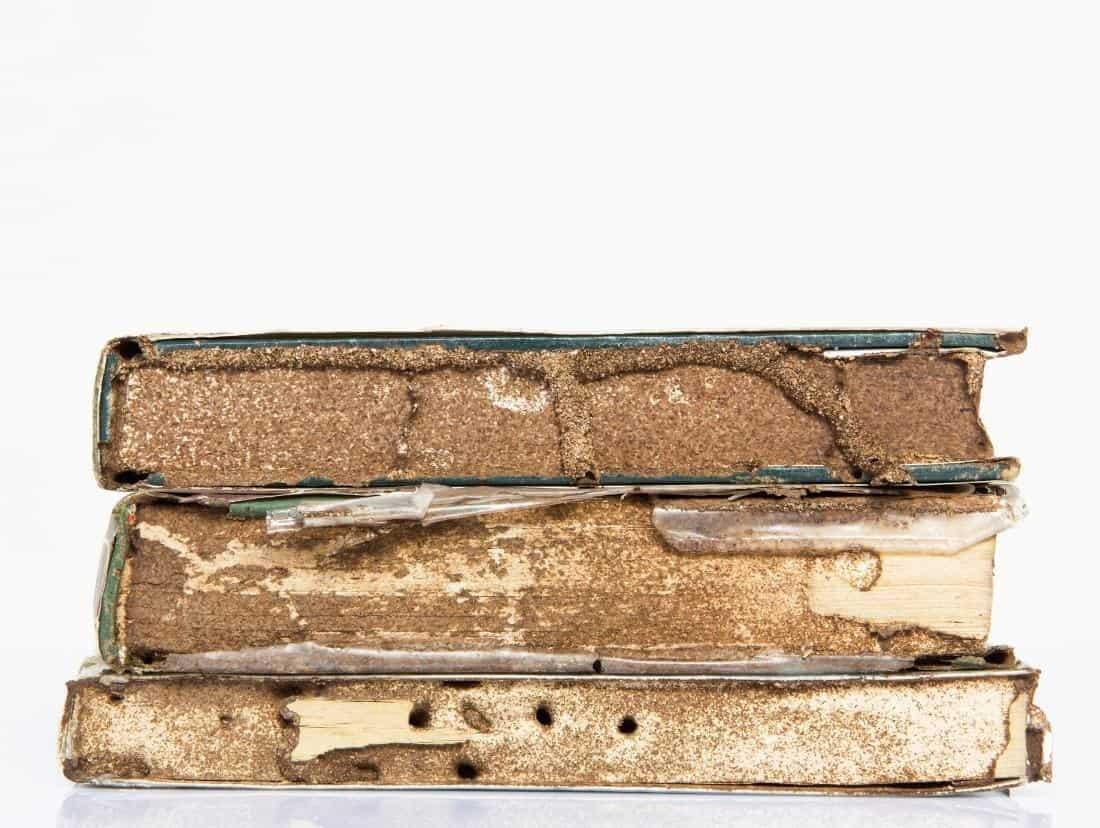 Do Termites Eat Books