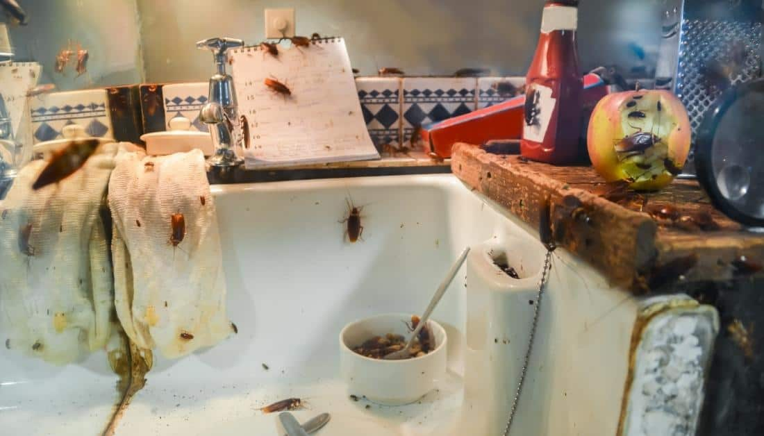 Cockroaches in Dirty Kitchen