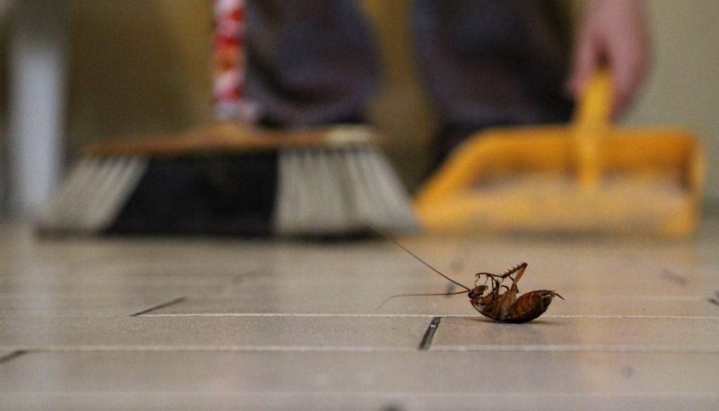 How To Get Rid Of Blattidae