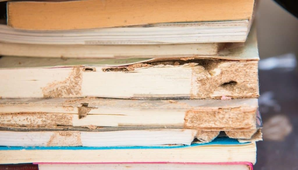 How To Get Rid Of Termites In Books