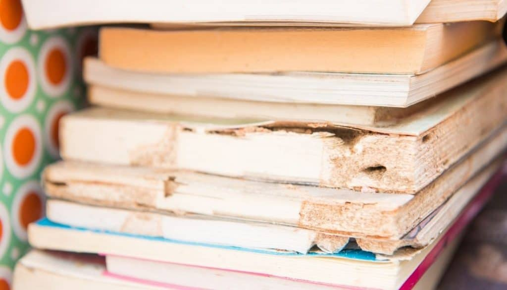 Signs of Termite Infestation In Books