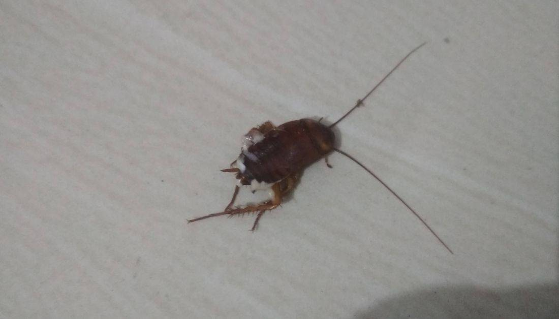 Can you squish a cockroach