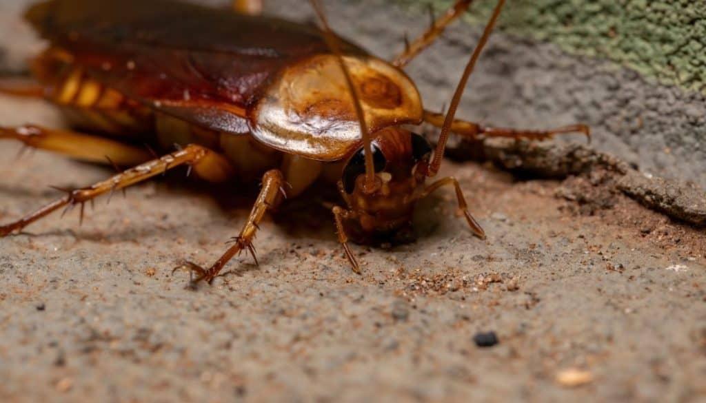 Do roaches get inside when it rains