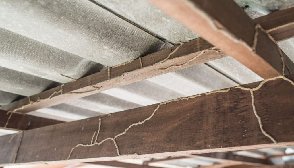 How To Know How much damage termites have done