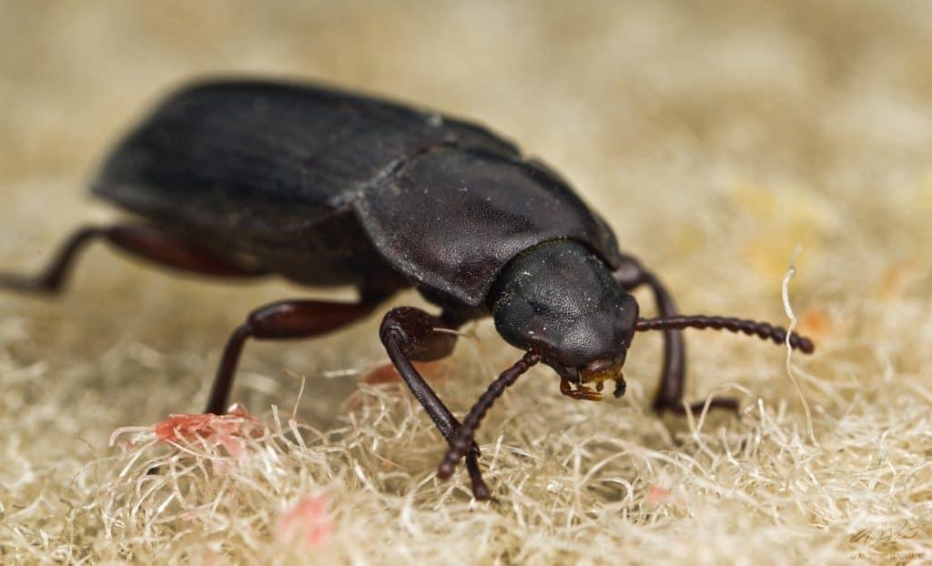 Little Black Bug In A Car
