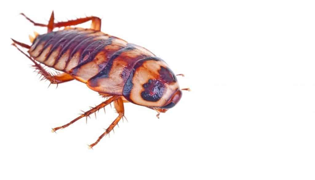 roaches in clean apartment