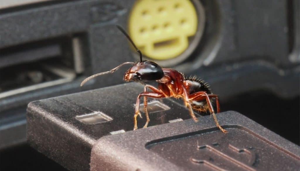 Ants In Laptop