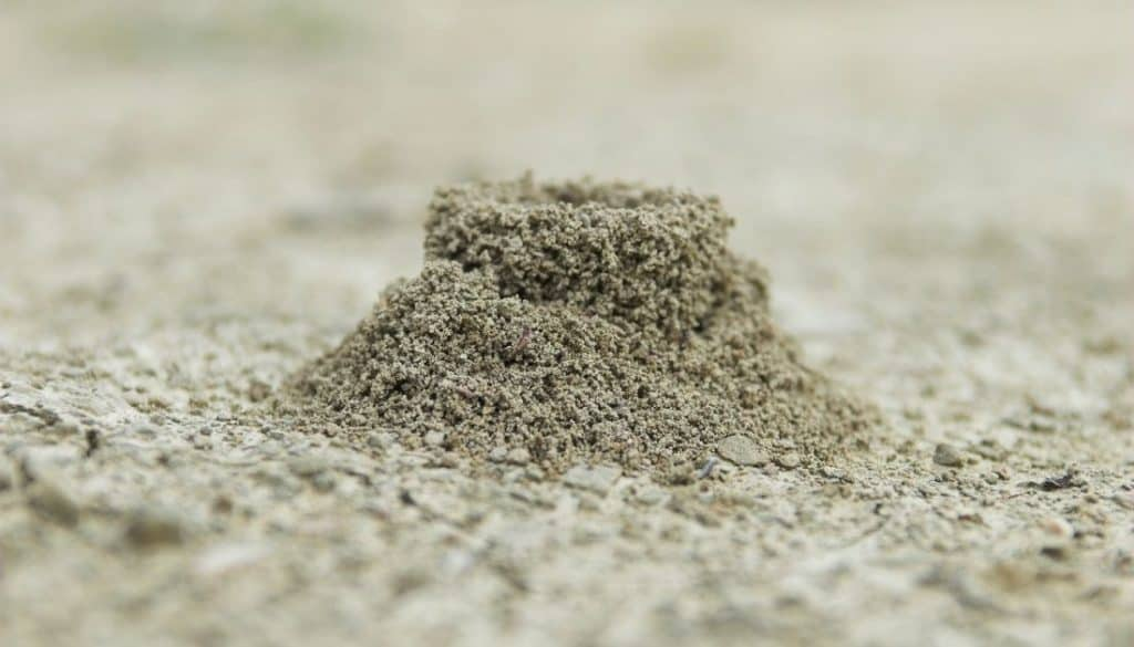 Fire Ant Mound Nest On Floor