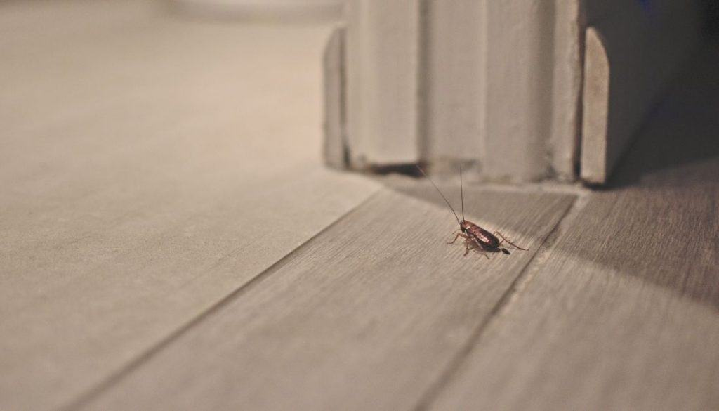 How To Tell An Apartment Has Roaches Before You Move In
