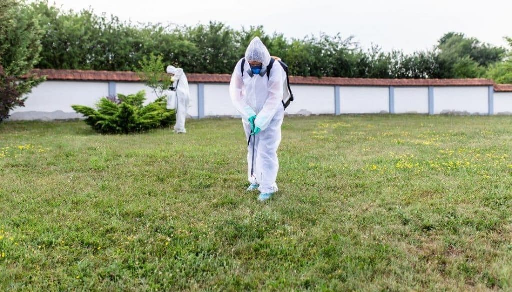 Professional Termite Controllers
