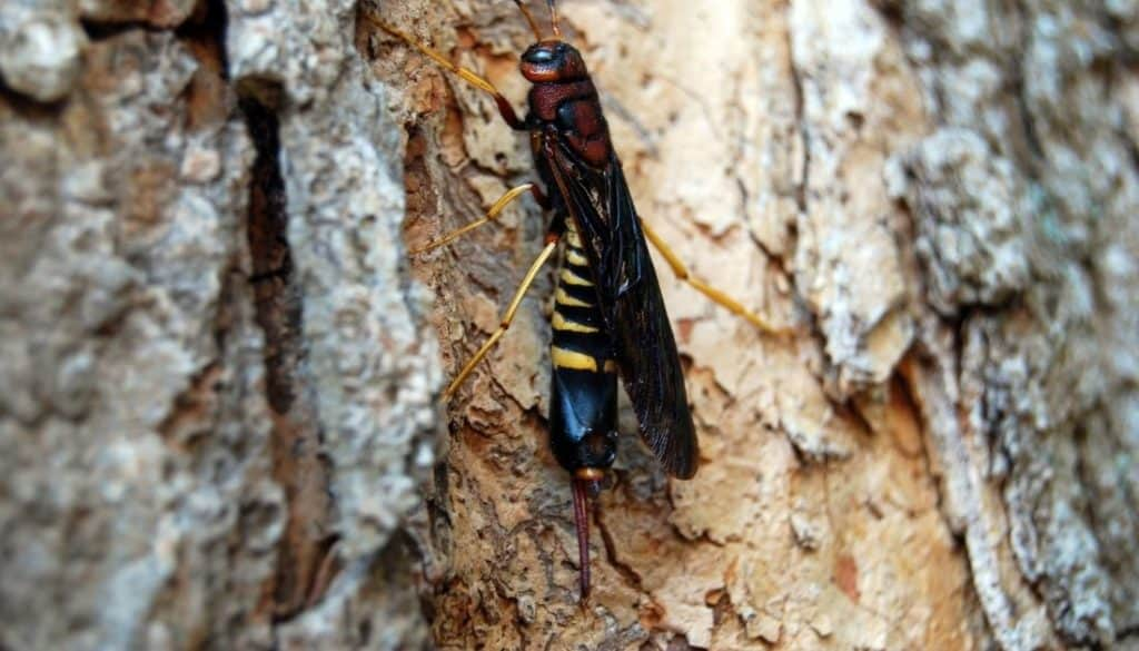 Wasp That Eats Wood