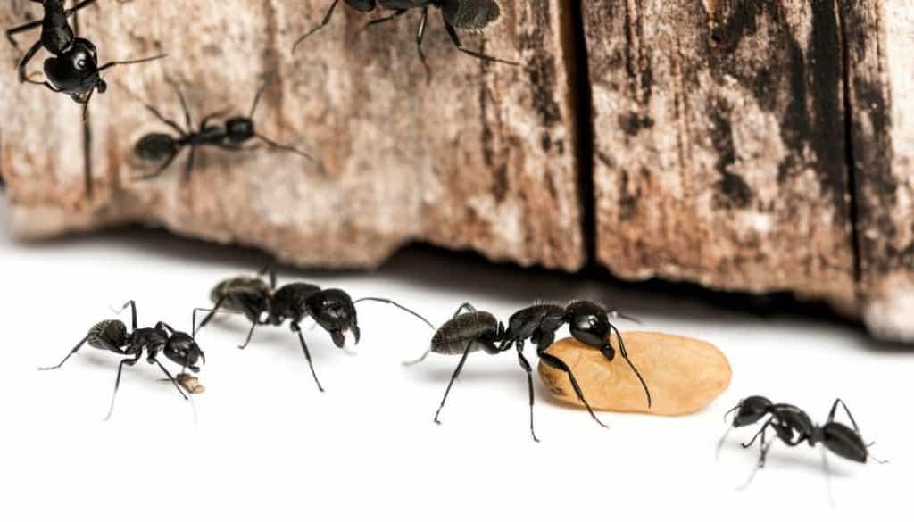 What Do Carpenter Ants Eat