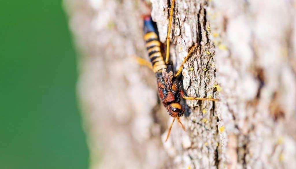 wood wasp damage
