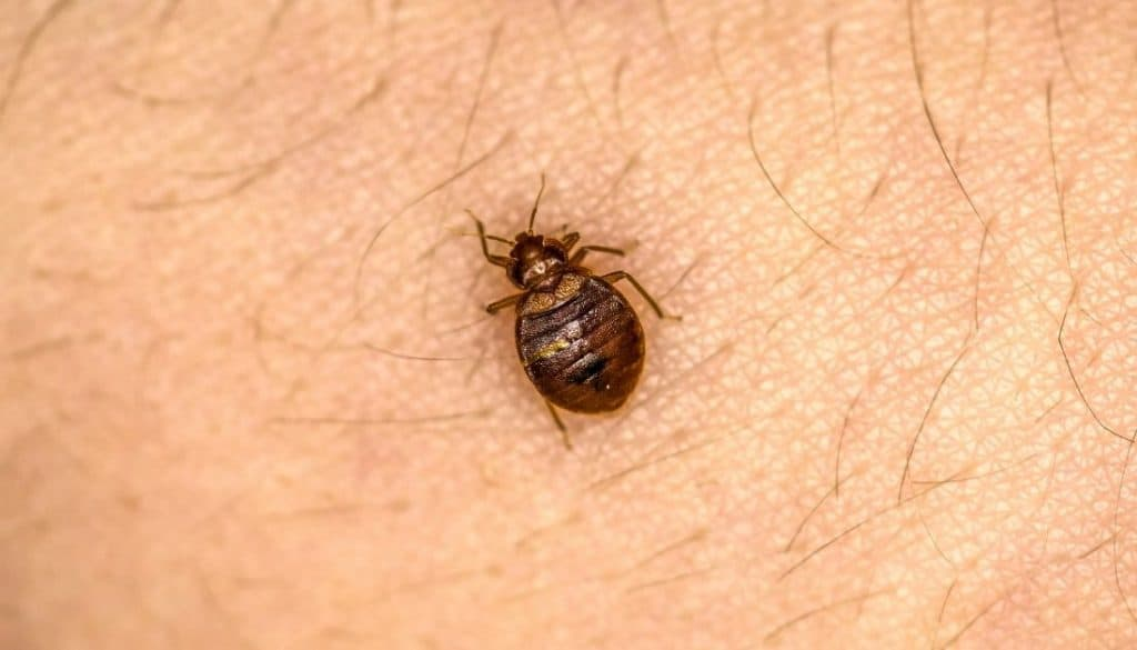 5 things to put on your body to prevent bed bug bites