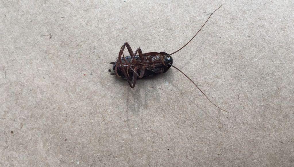 How To Get Rid Of cockroaches in the garage
