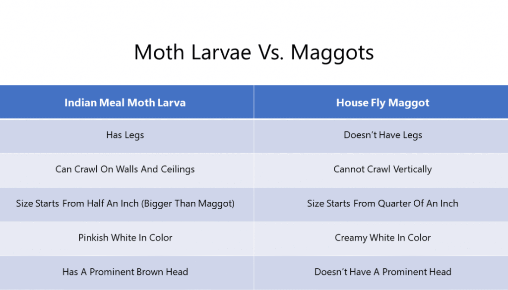 Moth Larvae Vs. Maggots