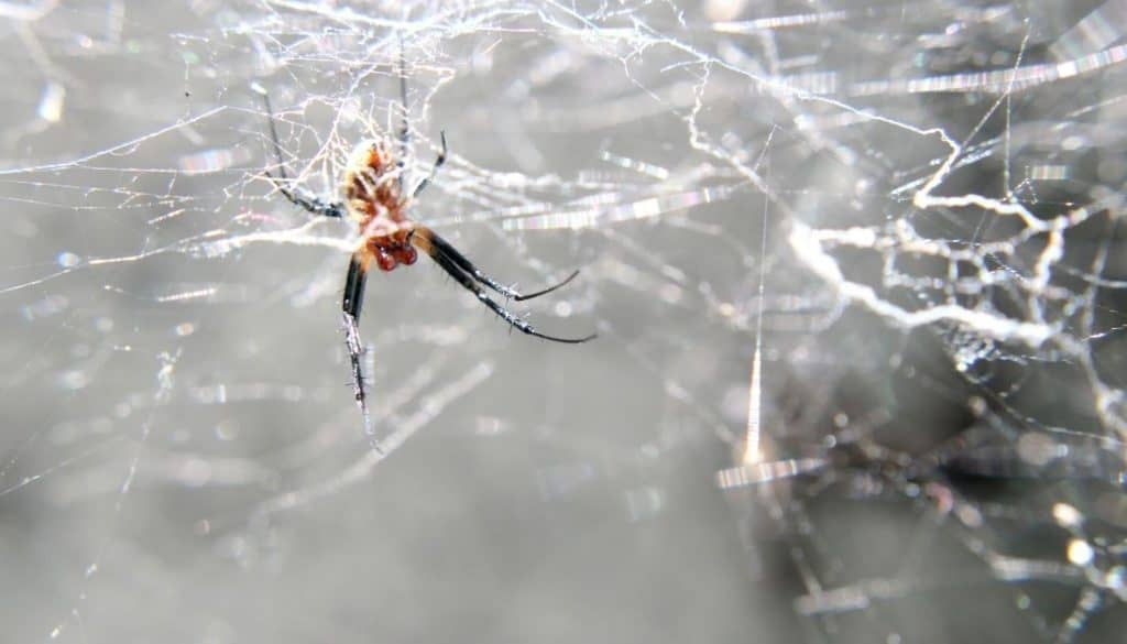 Best way to get rid of spiders in garage
