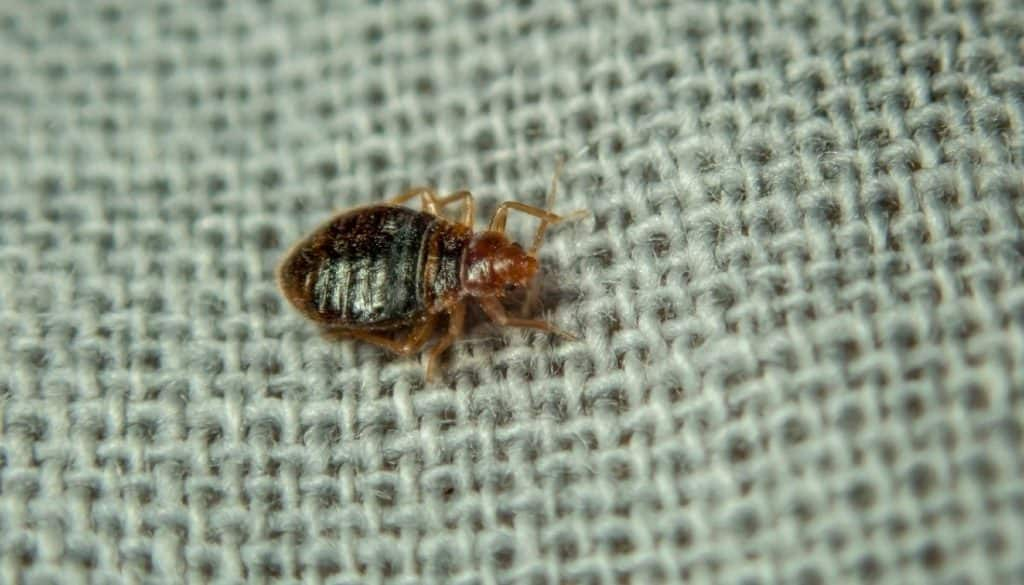 Can Bed Bugs Bite through clothing