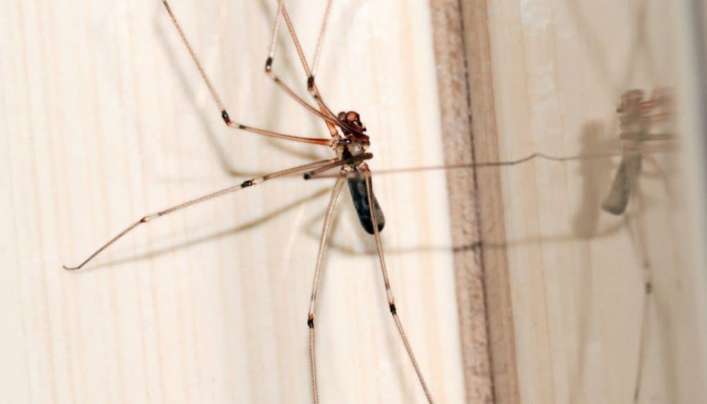 Get Rid Of Spiders In Garage