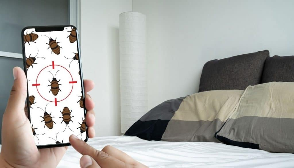 How to check if an apartment has bed bugs