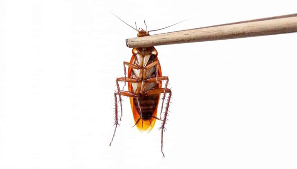 How to kill a cockroach without touching it