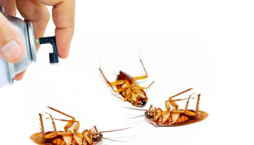Roach Spray To Kill Roaches