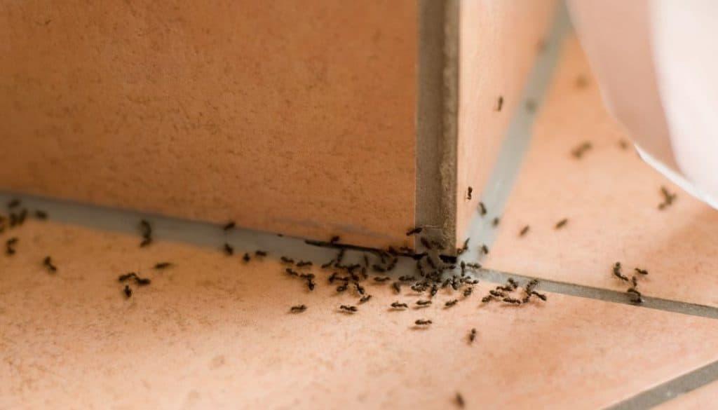 Ants in bedroom