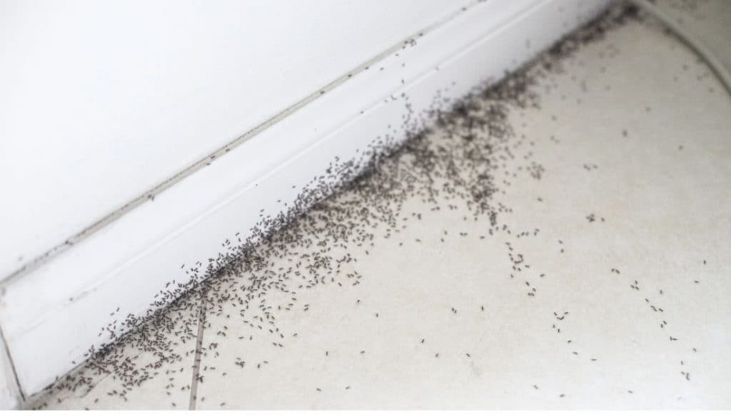 Get Rid of ants in bedroom