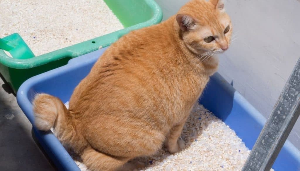 Get rid of Bugs in the cat litter box