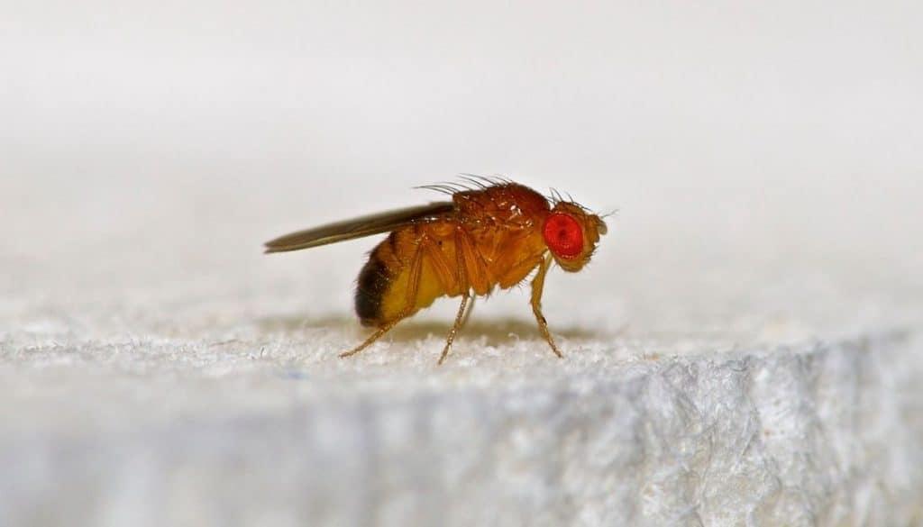 Gnats - Yellow Orange Bugs In Pool