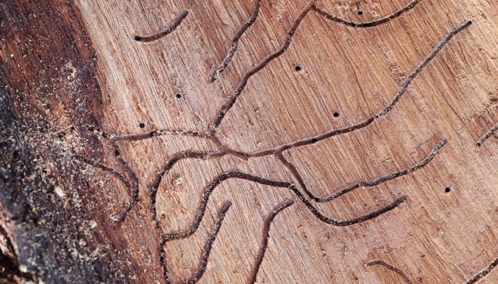Termite Holes In Trees