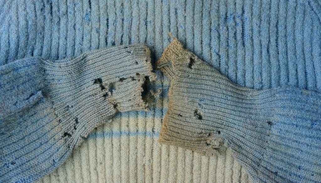 damaged sweater by carpet beetles