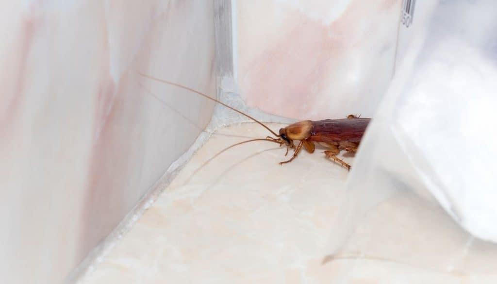 Cockroach Hiding