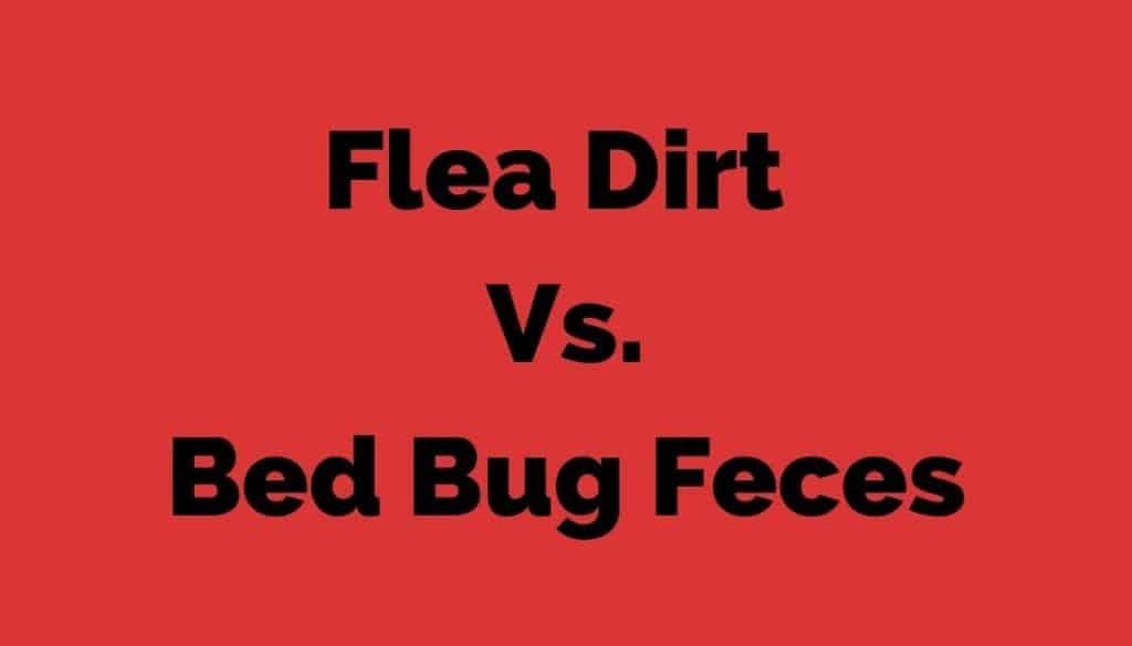 Flea Dirt Vs. Bed Bug Feces