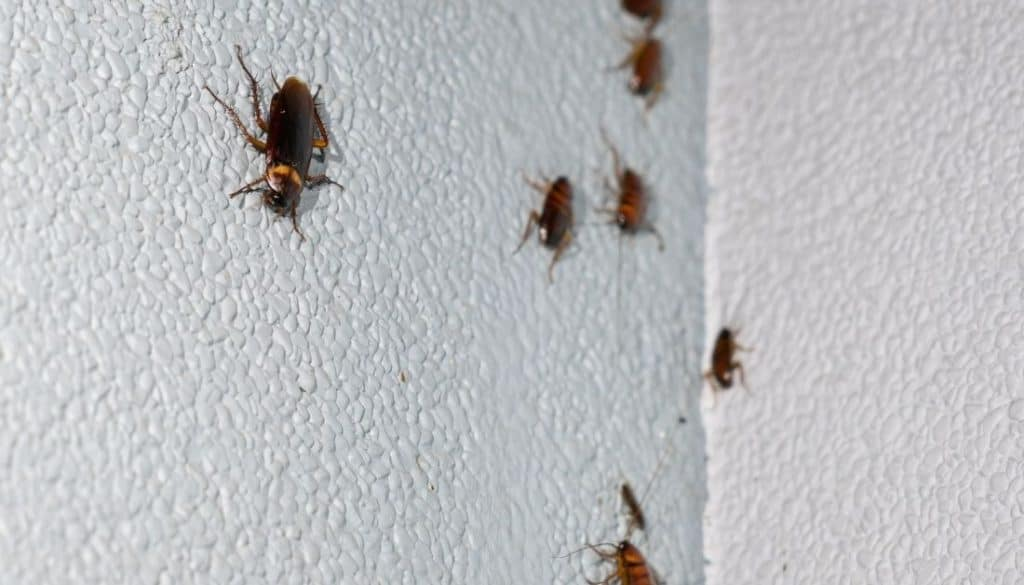 How to know if roaches are in walls