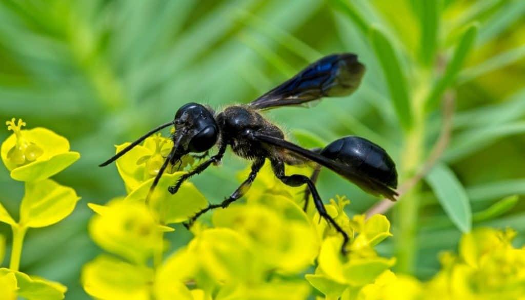 Black Wasps in California