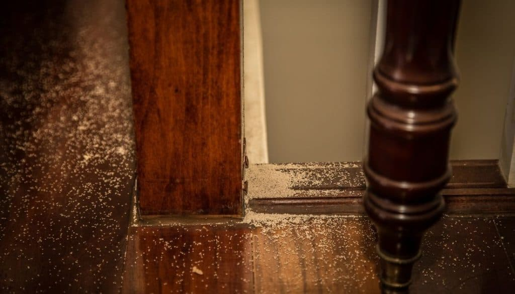 Termite droppings from the ceiling
