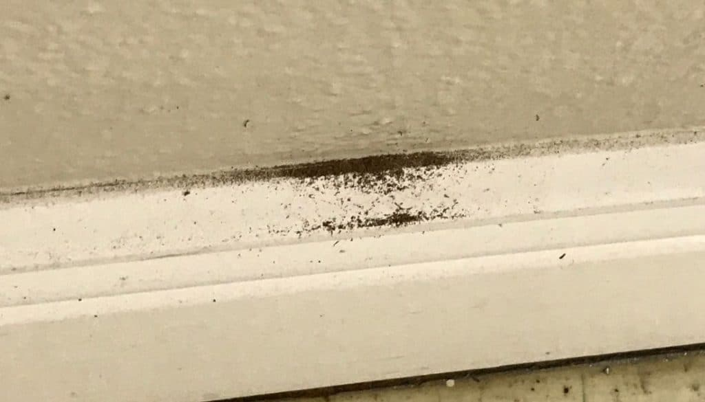 Termite dust at the wall's base - signs of termites in walls