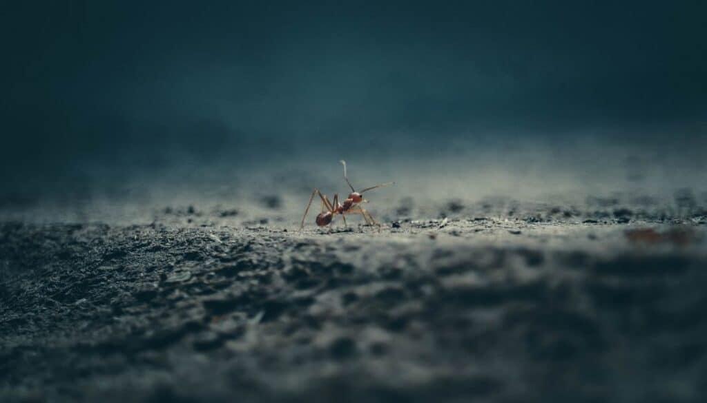 Winter bugs that bite