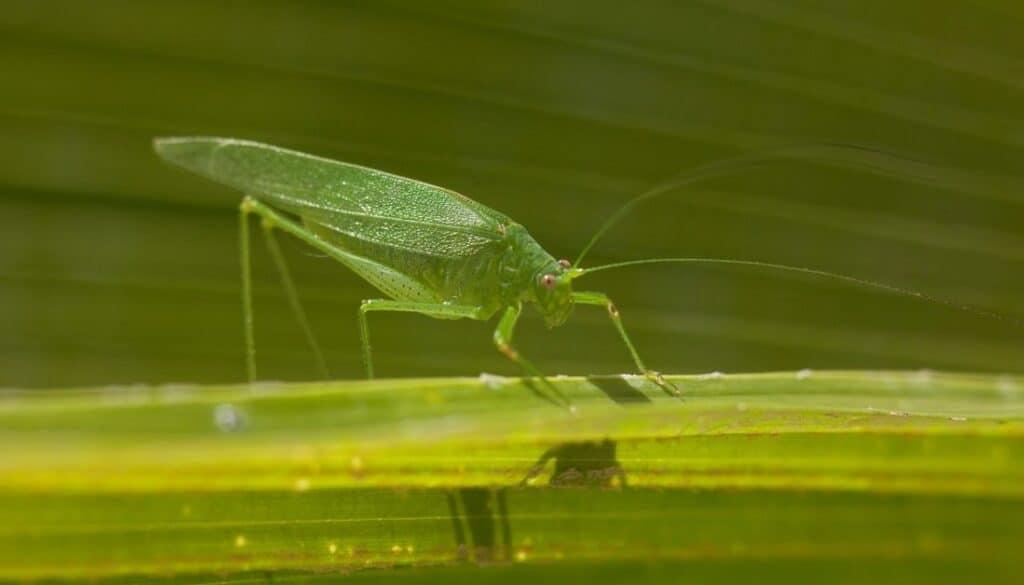 Tiny Green Bugs That Bite